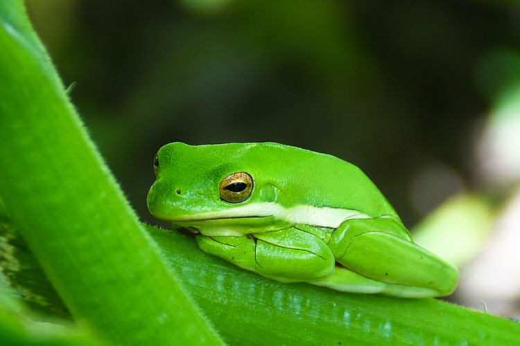 Close-up of green frog on plant