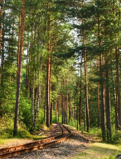 the way / Kromlau (Germany) Germany Kromlau Nature Naturelovers Walking Around Summer Summertime On The Road On The Road Again Railway Railway Track Trees Afternoon Trees And Nature Treescape Afternoon Sun Tree Tree Area Forest Tree Trunk WoodLand Sky Grove Tall - High