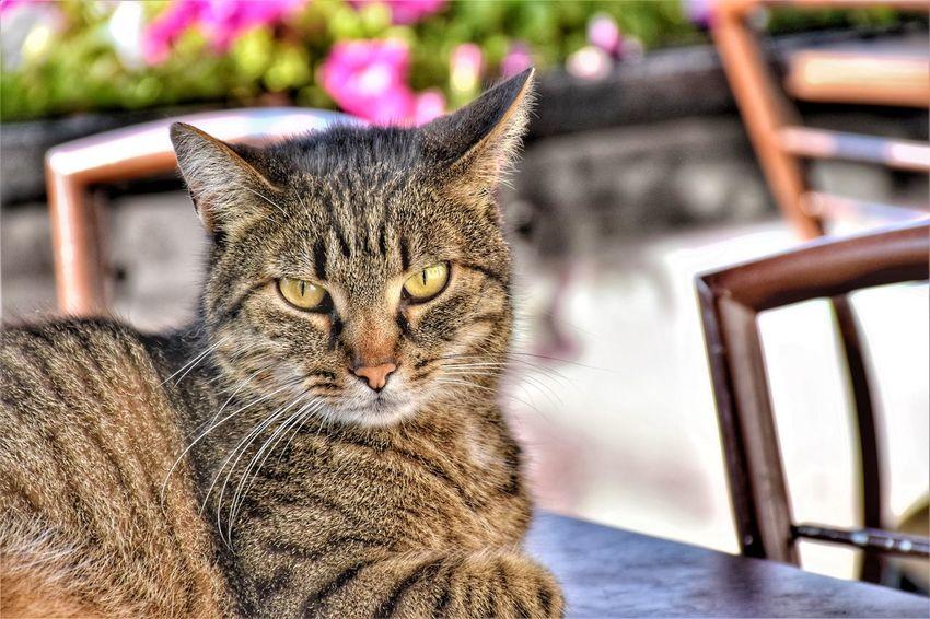 Animal Pets Portrait Feline Domestic Cat Sitting Animal Themes Close-up Cat
