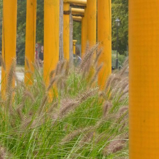Paint The Town Yellow Architecture Beauty In Nature Close-up Day Freshness Grass Growth Nature No People Outdoors Plant Yellow Discover Berlin EyeEmNewHere
