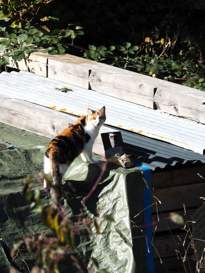 Animal Themes Animals In The Wild Cat Day Domestic Animals Domestic Cat Feline Mammal Nature No People One Animal Outdoors Pets Sitting