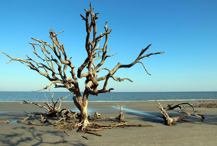 View of driftwood on beach against clear sky