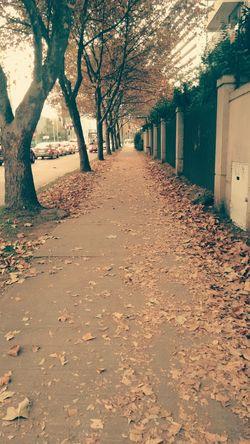 Hojas Secas calles con hojas First Eyeem Photo