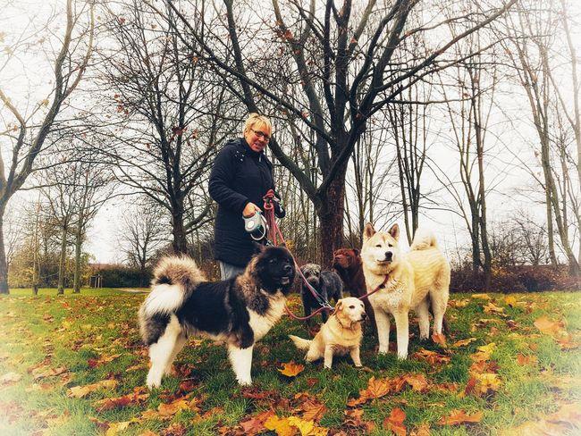 Dog Pets Domestic Animals One Person Outdoors Adult Sky Nature Dogwalk Autumn2018 How Is The Weather Today? Dog Love Autumn