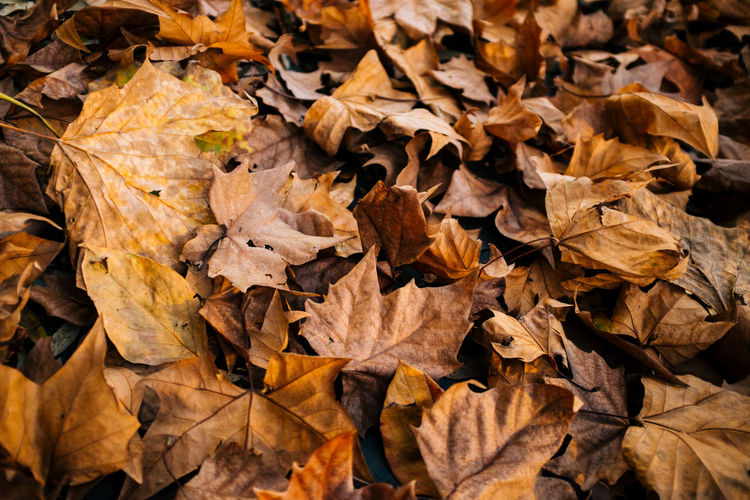 Fall vibes Autumn Backgrounds Beauty In Nature Change Close-up Day Dry Fallen Fragility Fujifilm Fujifilm_xseries Full Frame Heap Large Group Of Objects Leaf Leaves Many Maple Maple Leaf Natural Condition Nature No People Outdoors Vscofilm X100S