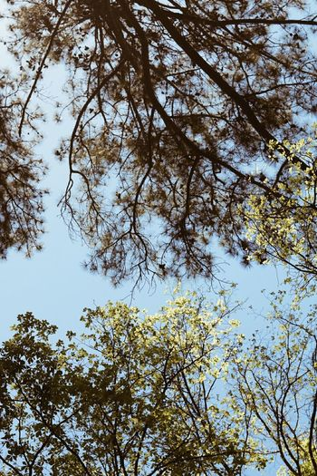 Low angle view of flowering trees against sky