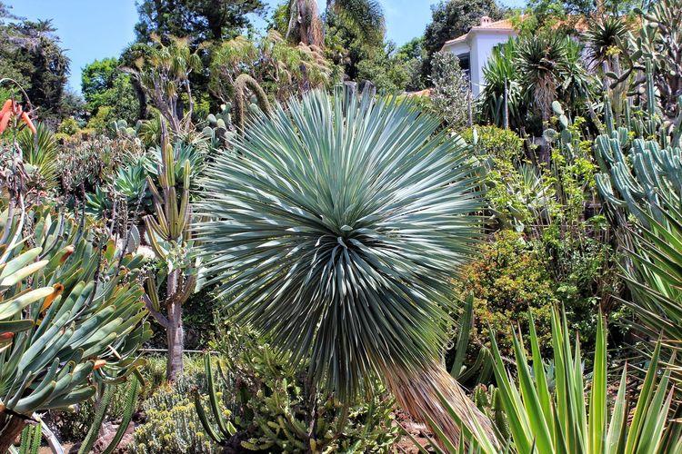 vegetation Vegetation Tree Palm Tree UnderSea Sky Close-up Green Color