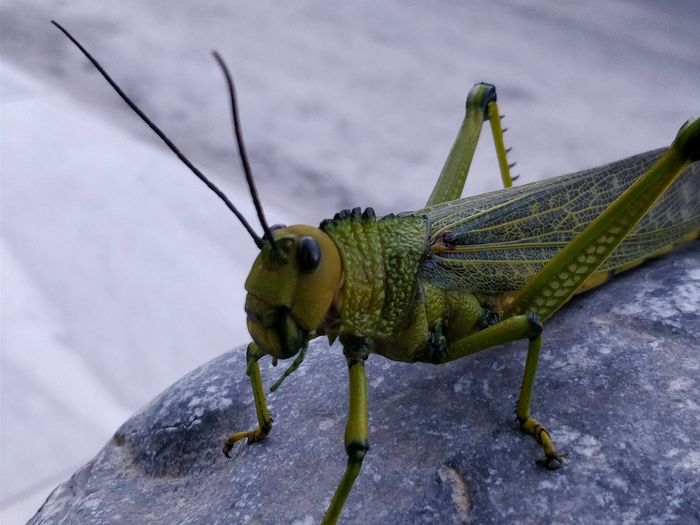 Insect Animal