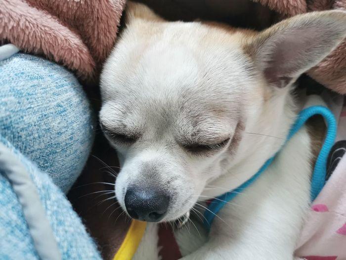 Close-up of puppy sleeping