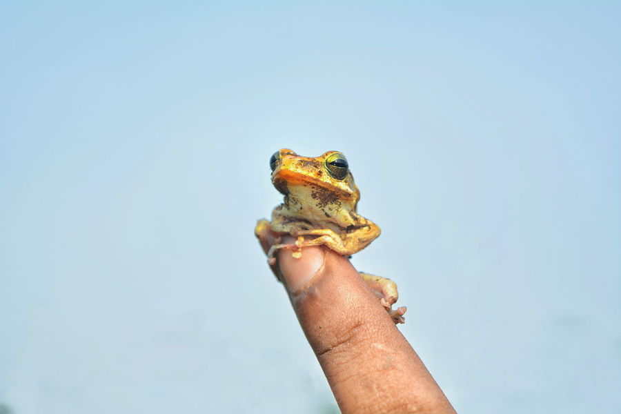 tiny creature Adult Animal Themes Animal Wildlife Animals In The Wild Blue Close-up Copy Space Day Holding Human Body Part Human Hand Nature Nikon D5200 Nikonphotography One Animal One Man Only One Person Outdoors People Real People Reptile Sky Tiny Tiny Creature VSCO EyeEmNewHere