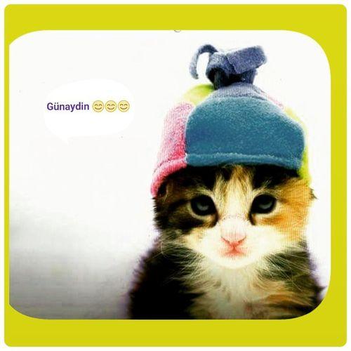 Günaydın Hava_soğuk Sisli Photogrid