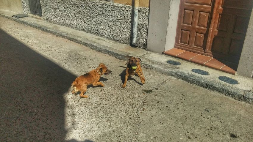 Dogs playing Animal Themes Domestic Animals One Animal Mammal Pets High Angle View Dog Feline Domestic Cat Cat Zoology Day Whisker Outdoors Animal No People