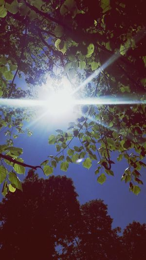 The Week On EyeEm Tree Sunbeam Nature Beauty In Nature No People Sunlight Outdoors Leaf