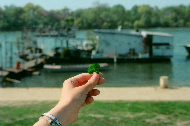 Cropped hand holding clover leaf against harbor