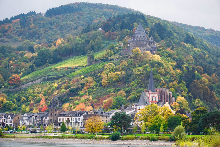 Autumn colors along the Rhine river towns of Germany Architecture Beauty In Nature Building Exterior Built Structure Church Color Day Fall Green Color Growth House Lush Foliage Mountain Nature Place Of Worship Religion Rhine River River View Riverside Sky Spirituality Tranquility Traveling Tree