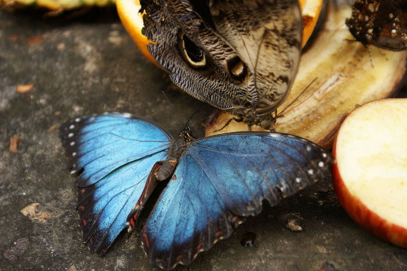 Close-Up Of Butterflies On Fruits