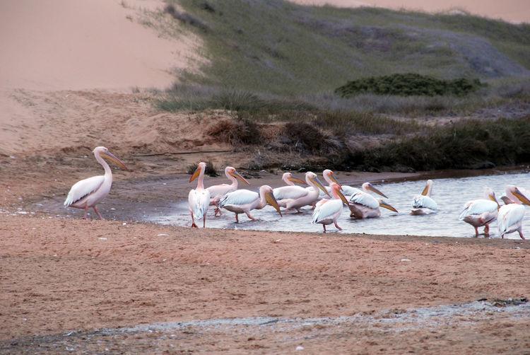 Birds perching on shore