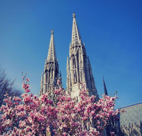 Showcase April Urban Spring Fever Nature Springtime Vienna Travel Naturelovers Things I Like SkyArchitecture Blue Building Exterior Built Structure Church City Clear Sky Day Famous Place Flower Freshness Growth Blue Wave Tree Magnolia Tree Magnolia_Blossom
