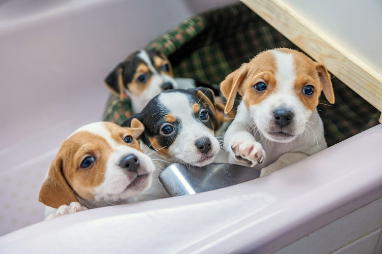 Close-up of puppies relaxing on pet bed at home