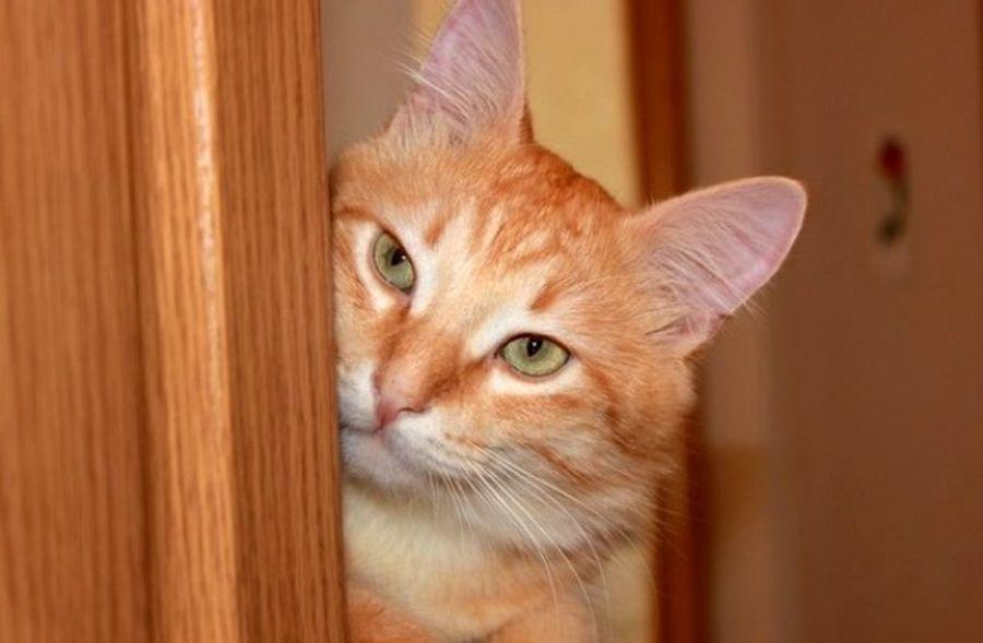 Cat Áfonya Афоня рыжий кот Afonsiko Cats Cat♡