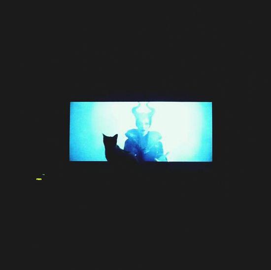 Maleficent Cat