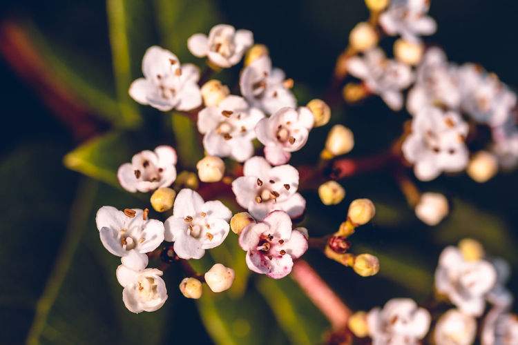 Flower Flowering Plant Growth Fragility Beauty In Nature Plant Vulnerability  Freshness Close-up Selective Focus Flower Head No People Nature Focus On Foreground Inflorescence Petal Blossom Pollen Springtime Botany Cherry Blossom Cherry Tree