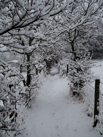 Piccotts end Snow Covered Branch Snow ❄ Winter Bare Tree Beauty In Nature Branch Branches Of Trees Cold Day Cold Temperature Frozen Landscape Nature Scenics Snow Snow Covered Snow Day Snowcoveredtrees Snowing Tranquility Tree Weather White White Color Winter Winter Trees