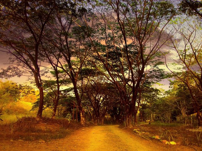 Enchanted Path Woods Forest PagadianCity Philippines Here Belongs To Me