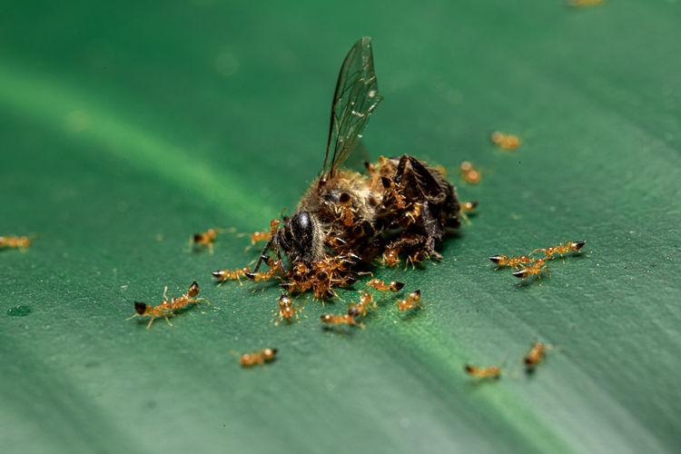 Animal Ant
