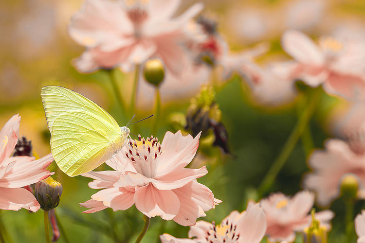 Animal Themes Animals In The Wild Beauty In Nature Blossom Close-up Day Flower Flower Head Focus On Foreground Fragility Freshness Growth Insect Nature No People One Animal Outdoors Petal Plant Springtime