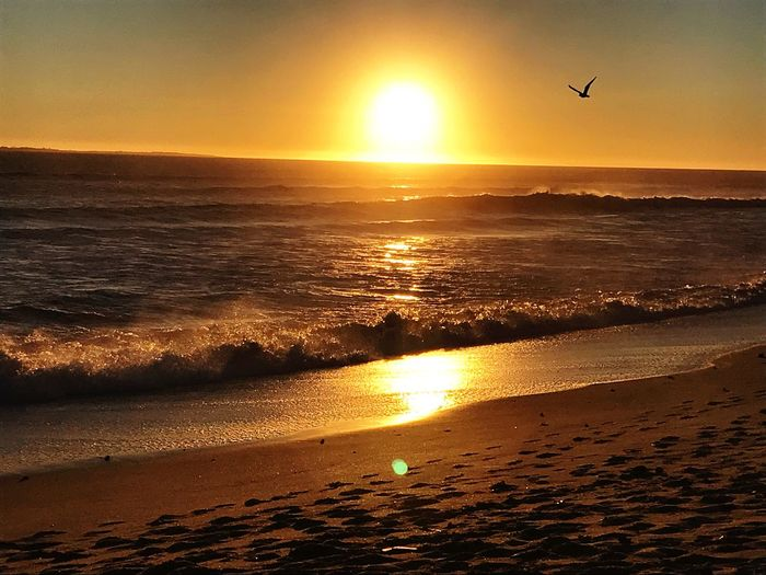 S u m m e r S u n s e t s Waves Happiness Salty Air Beach Life Nature Adventures Nature Is Art EyEmNewHere Sunset Water Sky Bird Sea Beauty In Nature Flying Scenics - Nature Sunlight Sun Beach Orange Color Nature Horizon Over Water