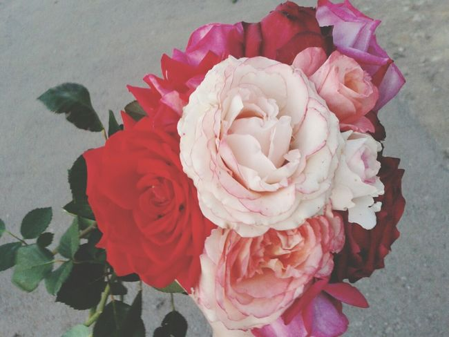 A Daddy Presented Flowers♥ Beautiful Flowers