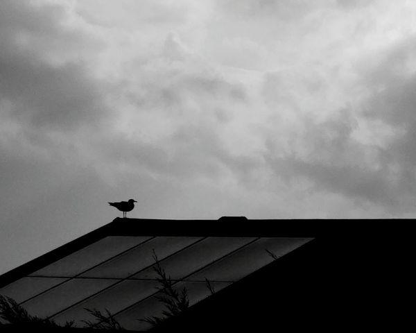 Sky Sky And Clouds Cloudporn Birds Bird