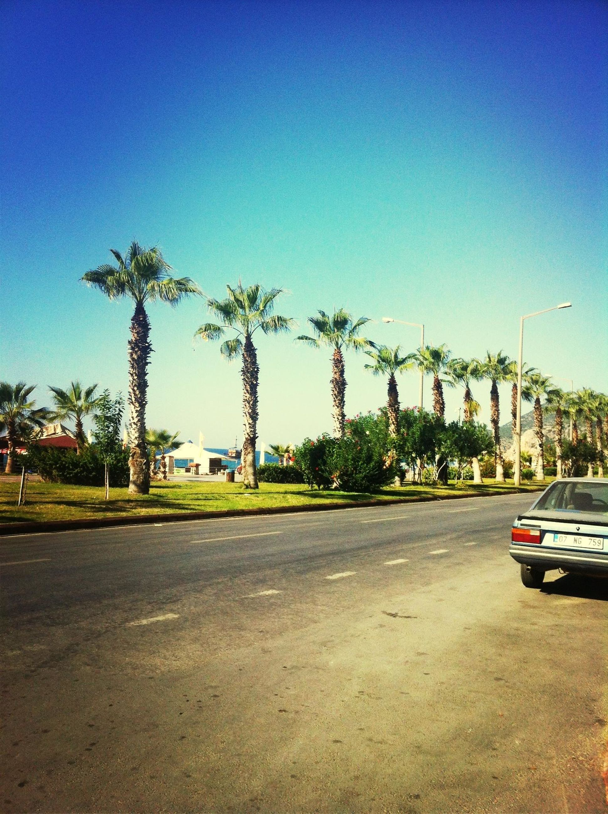 clear sky, blue, copy space, tree, transportation, car, palm tree, road, building exterior, land vehicle, street, mode of transport, architecture, built structure, sunlight, outdoors, day, sky, incidental people, no people
