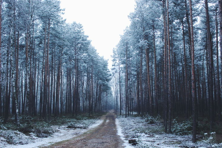 Snow Snow Is Falling  Winter VSCO Forest Nature