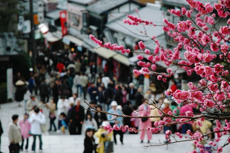 Cherry tree against crowd by shops