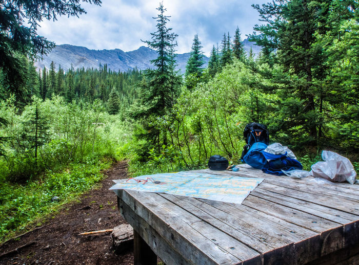 Planning a hike with a map on a picnic table in the backcountry of Banff National Park Adult Adventure Banff National Park  Beauty In Nature Camping Day Exploration Forest Hiking Hiking Gear Map Mountain Mountain Range Nature Only Women Outdoors Pine Tree Planning Sky Tree Trekking Wilderness WoodLand