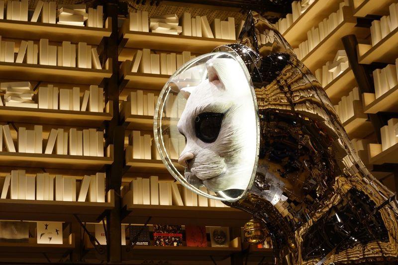 銀座シックス。蔦屋のイベント。ヤノベケンジ EyeEm Best Shots EyeEm Masterclass Catstatue Yanobekenji Art Indoors  No People Built Structure Architecture Day Close-up