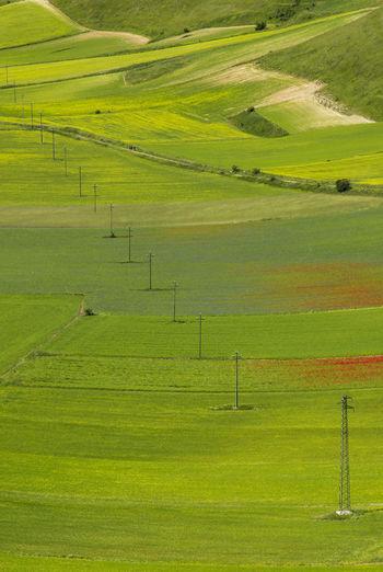 Agriculture Beauty In Nature Castelluccio Day Field Grass Grassy Green Green Color Growth Horizon Over Land Idyllic Landscape Lush Foliage Nature No People Non-urban Scene Norcia Outdoors Remote Rural Scene Scenics Sky Tranquil Scene Tranquility