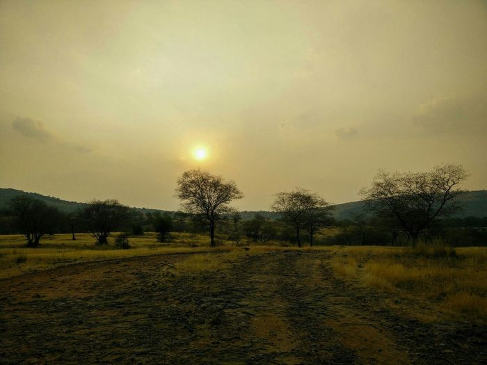 Somewhere at Ranthambore India Relaxing Enjoying Life Hello World Sunset Silhouettes Creative Light And Shadow Travel Photography Shillouette Clouds And Sky Golden Landscape Shadows & Lights Lights Wildlife Photography