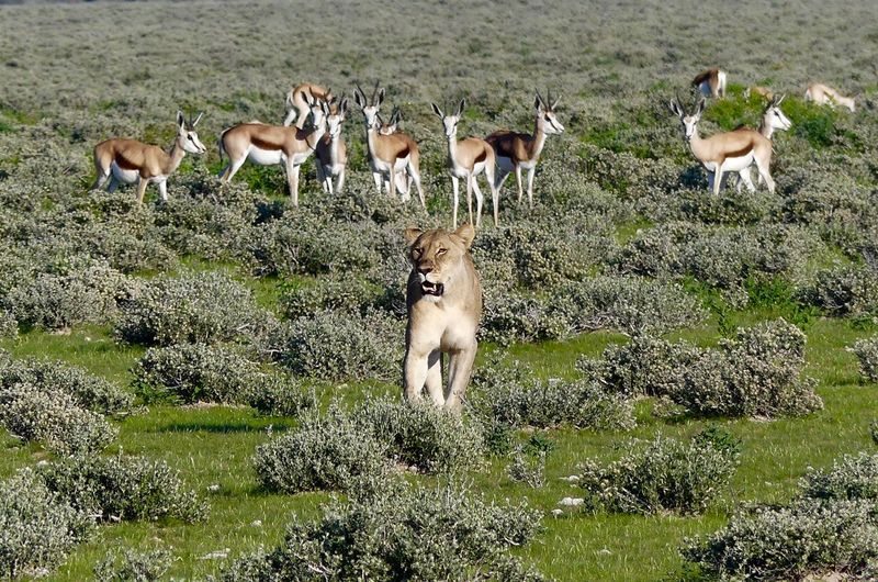 Animal Themes Animal Wildlife Animals In The Wild Beauty In Nature Day Full Length Grass Grazing Large Group Of Animals Mammal Nature No People Outdoors Standing Young Animal