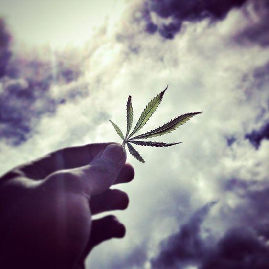 Its a bird, its a plane.... 420 MaryJane Chilling Sun Puffpuffpass Ganja Sky