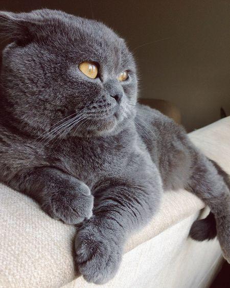 EyeEm Cats Cute♡ Pretty Cat Duman Sweet♡
