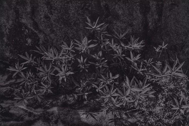 snapimage//GFSYIHB Black & White Nature Popular Photos