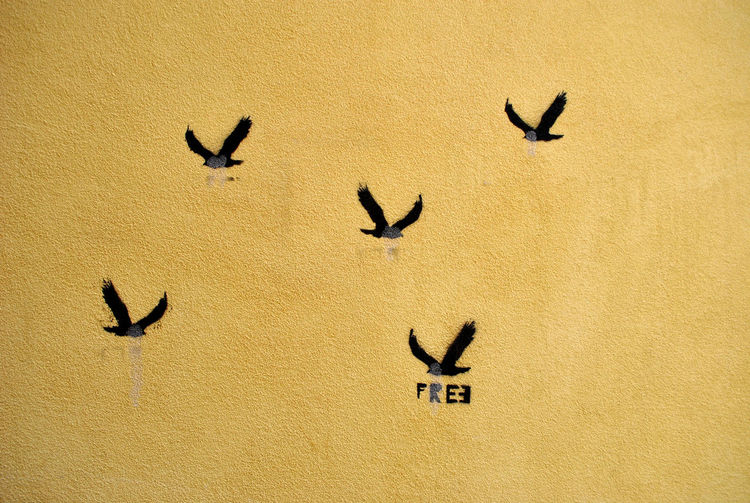 Beautiful sentiment stenciled on an old wall in Florence, Italy. EyeEmNewHere Free Freedom Sentiment Stencil Wall Art Abstract Bird Creativity Outdoors Representation Stencil Art