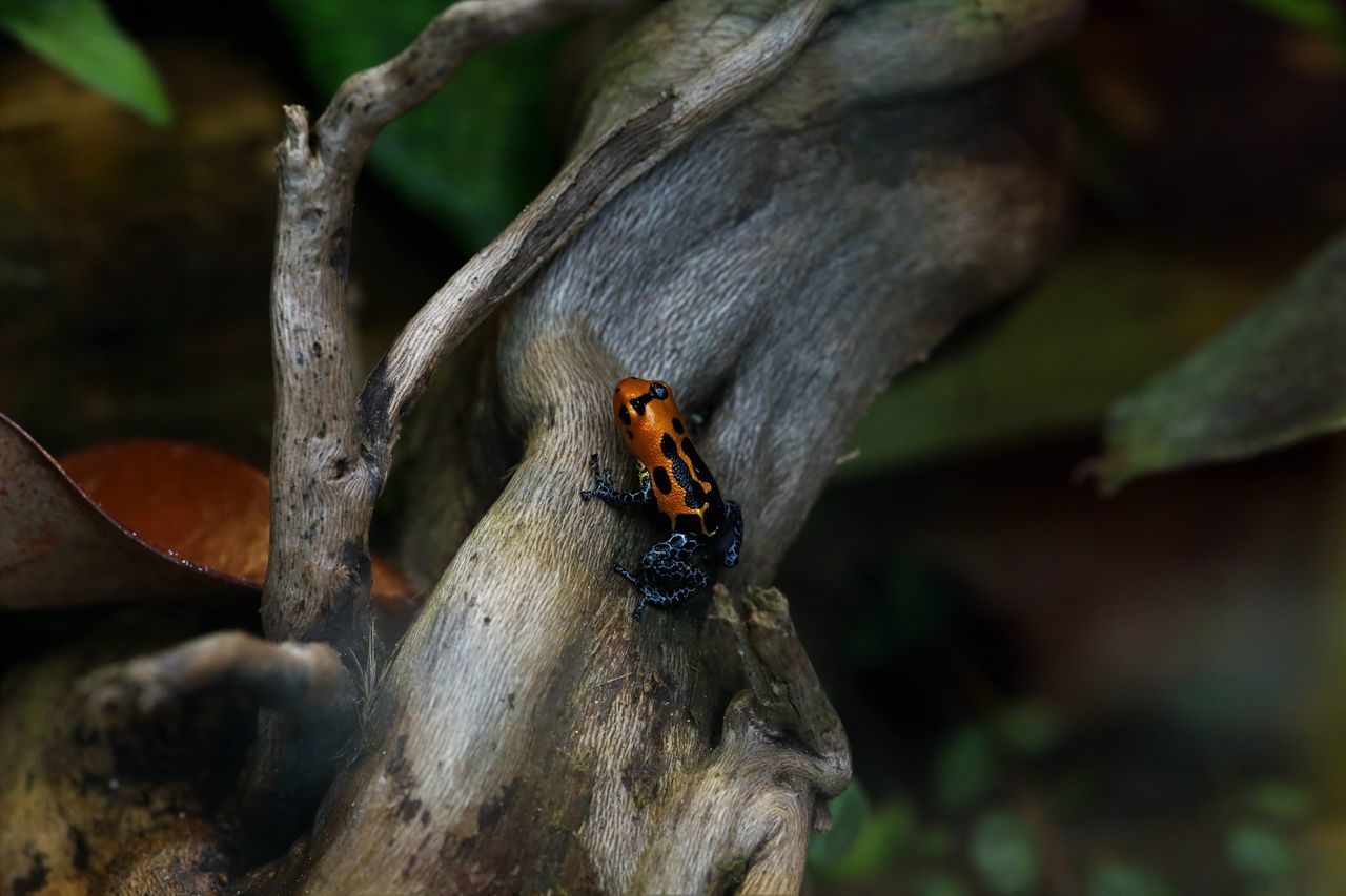 insect, animals in the wild, animal themes, one animal, outdoors, day, nature, close-up, no people, animal wildlife, ladybug