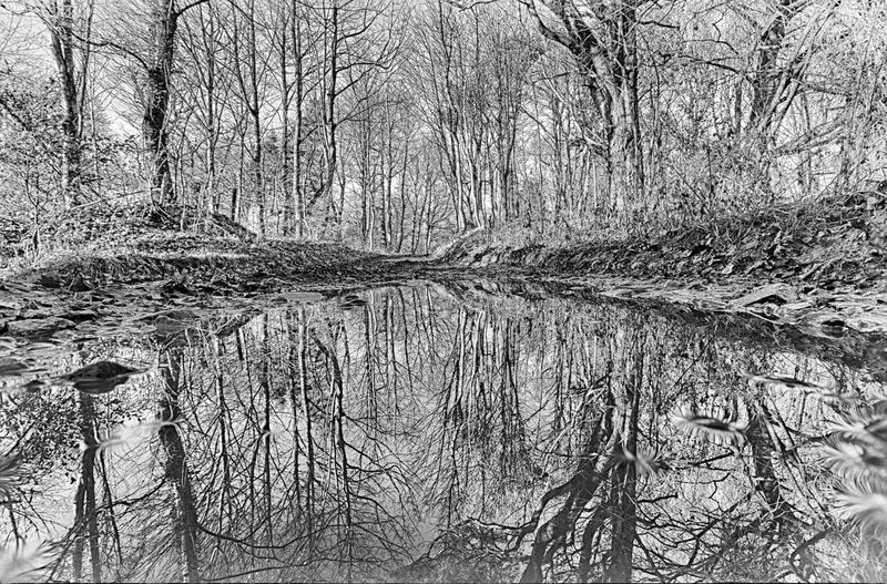 reflection Reflection Bare Tree Beauty In Nature Branch Forest Landscape Nature Outdoors Puddle Puddle Reflections Reflection Tranquility Tree Tree Trunk Water Winter