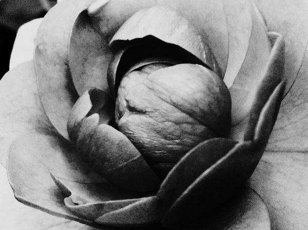 Monochrome Black And White Photography Blackrose Check This Out Theartofblackandwhite Blackisbeauty Frommygarden
