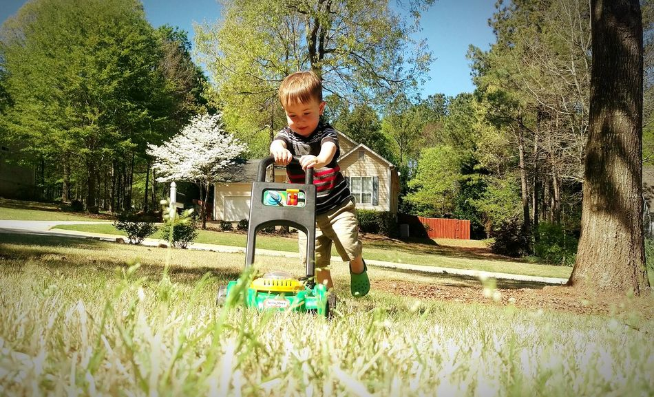 Nature Grass Mow Spring