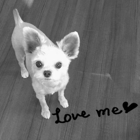 Love Dog Japan 犬